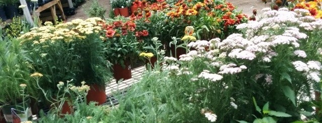 North Haven Gardens is one of * Gr8 Service Companies In Dallas (Misc.).