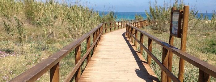 Playa de Arenales del Sol is one of Playas.