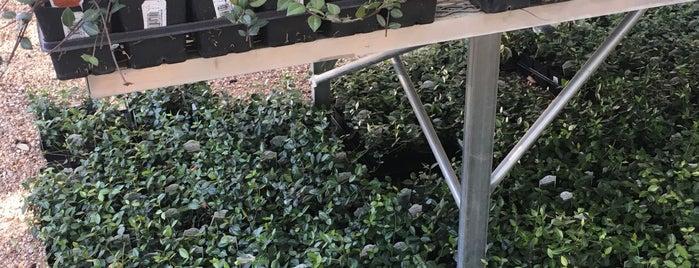 Milbergers Nursery is one of Current Best Of San Antonio 2012.
