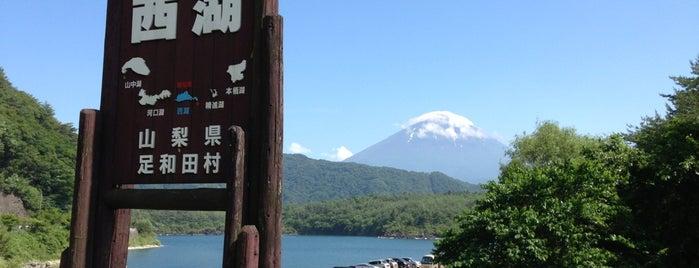 Lake Saiko is one of ski bum.