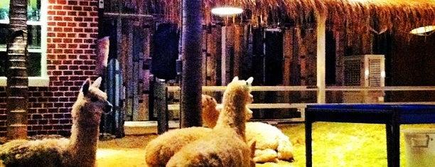 Alpaca View is one of อร่อย: ใกล้ ๆ บ้าน (บ้านลาดพร้าว).
