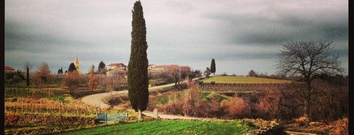 Agroturizam San Mauro – Sinkovic Wines is one of Mladina Konzum 1-3.