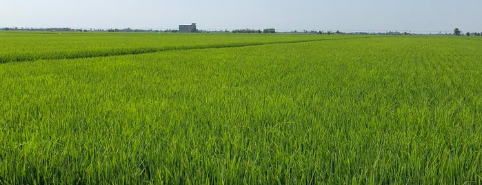 Sekinchan Paddy Field is one of All-time favorites in Malaysia.