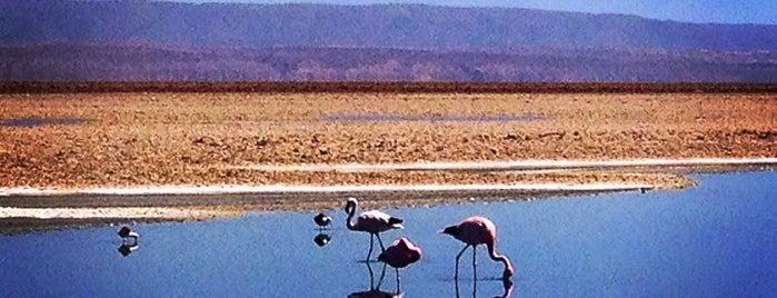 Reserva Nacional Los Flamencos is one of Atacama.