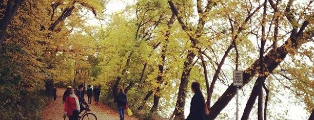 Howard M. Temin Lakeshore Path is one of Nature.