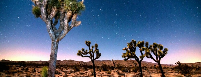 Joshua Tree National Park is one of Dead Rock Star Tour.
