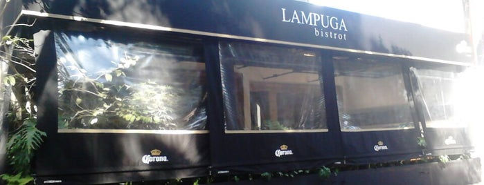 LAMPUGA POLANCO is one of Mediterranea.