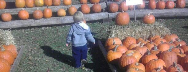 Fleitz Pumpkin Farm is one of Favorite Places.