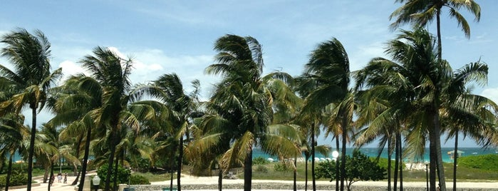 Hilton Grand Vacations at McAlpin-Ocean Plaza is one of Beach Hotels in Miami Beach.