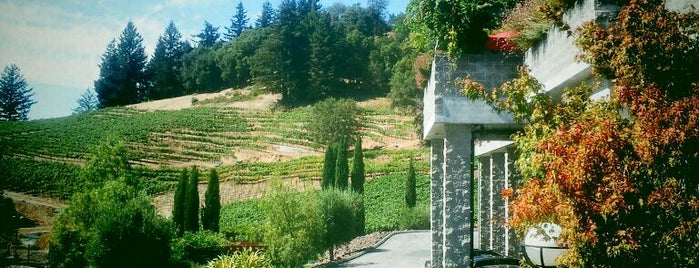 David Bruce Winery is one of Nor Cal Destinations.