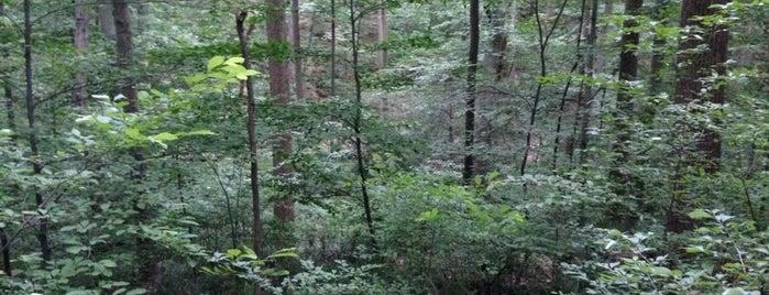 Boyd Big Tree Preserve is one of Wishlist.
