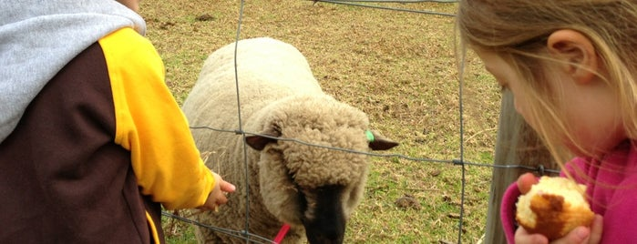 Collingwood Children's Farm is one of Great Family Holiday Attractions Around Australia.