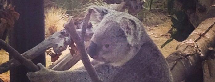 Koala Exhibit is one of San Diego.