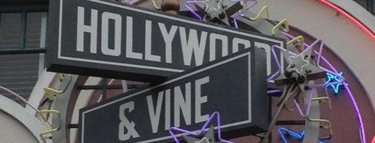 Hollywood & Vine is one of Walt Disney World.