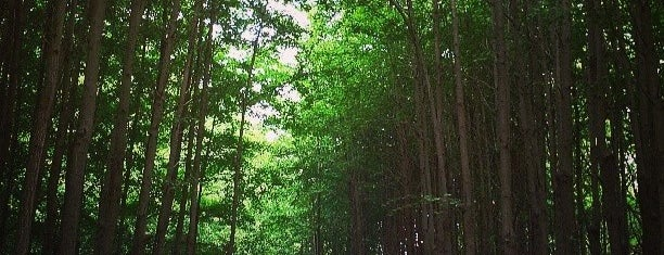 Seoul Forest is one of Seoul: Walking Tourist Hitlist.