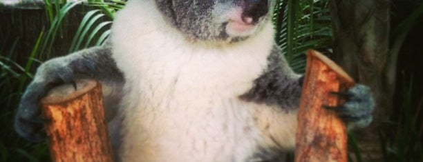 Symbio Wildlife Park is one of Great Family Holiday Attractions Around Australia.