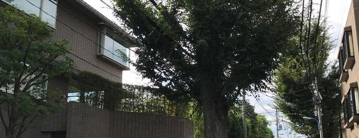 旧近衛邸のケヤキ is one of ☆.