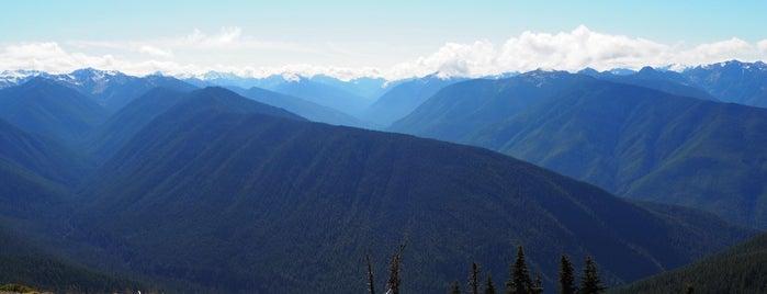 Hurricane Ridge is one of Olympic National Park 💚.