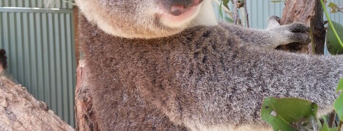 WILD LIFE Sydney Zoo is one of Australia Trip.