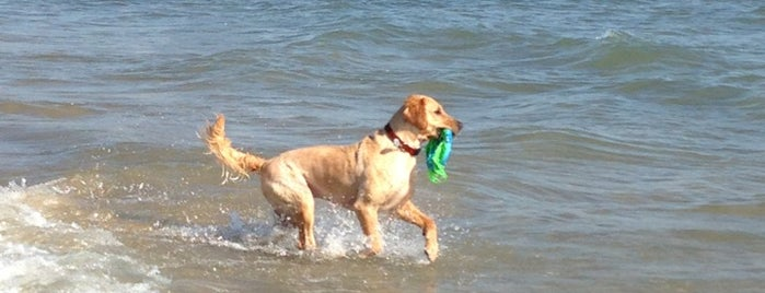 Montrose Dog Beach is one of Our 17 Favorite Pup-Friendly Places.
