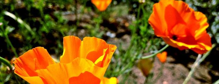 UCLA Mildred E. Mathias Botanical Garden is one of UCLA.