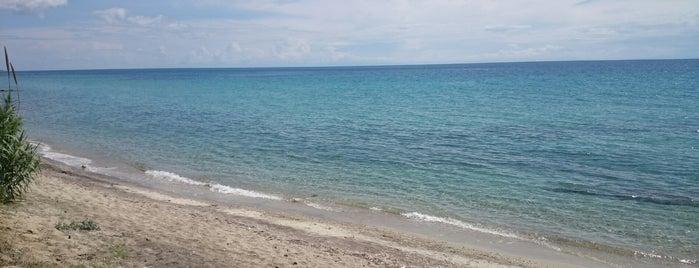 Elani Beach is one of 🌞🌊Chalkidiki-->to The Beach 🐋🐬🐟🐠🐡🦀.