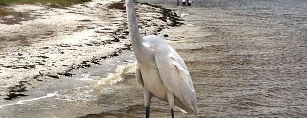 Sanibel Island Fishing Pier is one of Fort Myers/Naples.