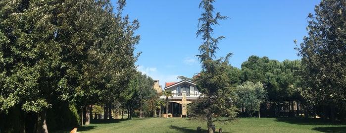 Grandma's Wonderland is one of Kahve-altı.