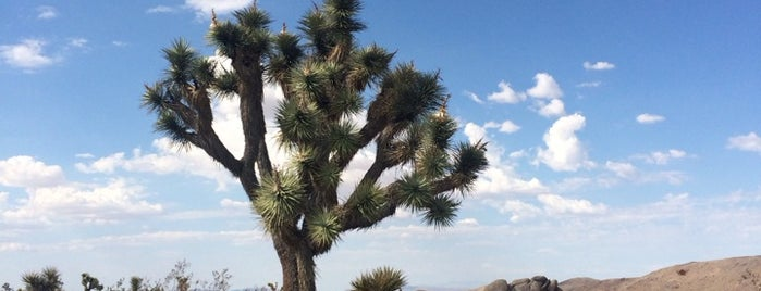 Joshua Tree National Park Pay Entrance is one of Psalm Sprangs.