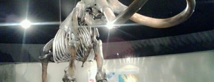 Page Museum at the La Brea Tar Pits is one of Museum Season - See Any of 29 Museums, Save $477+!.