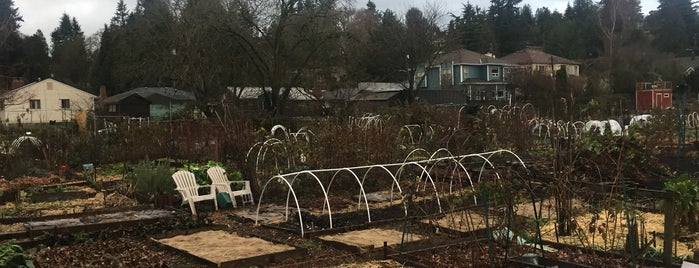 Picardo Farm P-Patch is one of Seattle's 400+ Parks [Part 3].