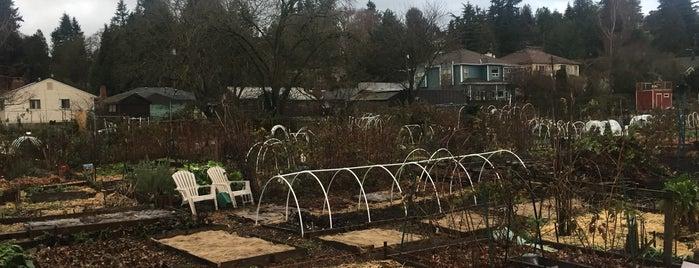 Seattle's 400+ Parks [Part 3]