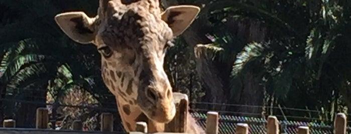 Santa Barbara Zoo is one of Travel Guide to Santa Barbara.