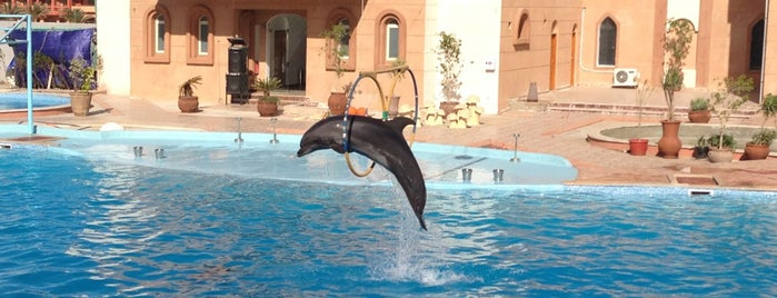 Dolphina is one of Be Charmed @ Sharm El Sheikh.