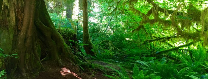 Hoh Rainforest Visitor Center is one of Olympic National Park 💚.