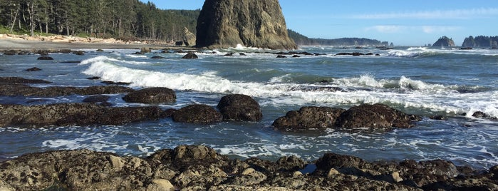 Rialto Beach is one of Olympic National Park 💚.