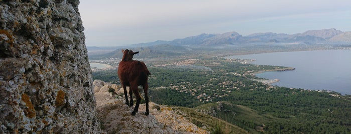 Talaia d'Alcudia (446 m Gipfel) is one of Mallorca.