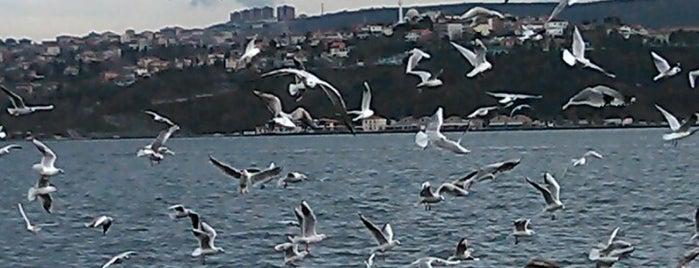 Yeniköy Spor Kulübü Tesisleri is one of İstanbul Avrupa Yakası #4 🍁🍃.
