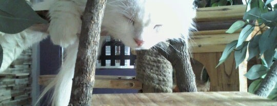 Ailu Cat Cafe is one of Café in town.