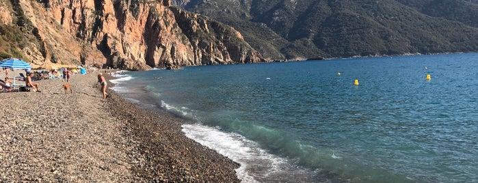 Plage de Bussaglia is one of Corsica.