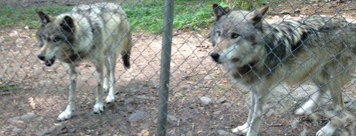 Camp Taylor & Lakota Wolf Preserve is one of Kid Stuff.