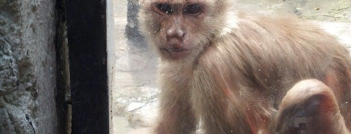 Zoológico de Baños is one of Things To Do In Ecuador.