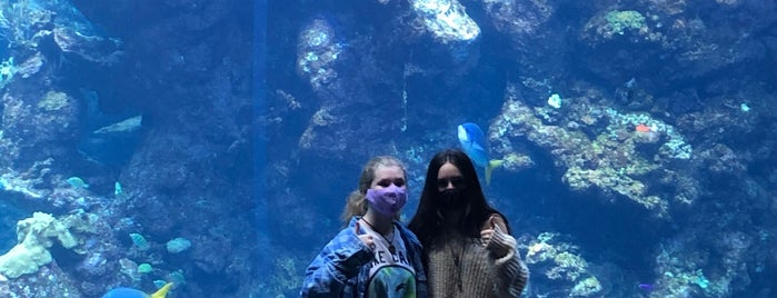 Philippine Coral Reef Exhibit is one of Visit to San Francisco.