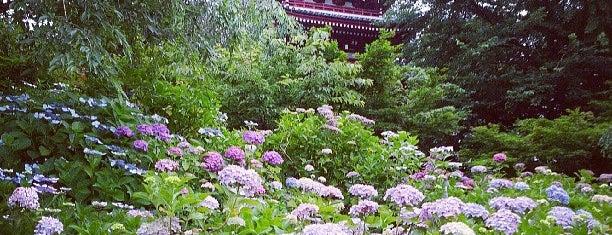 Hondo-ji Temple is one of サイクリング.