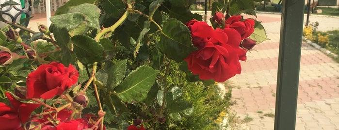 Yavuz Kır Kahvaltı Bahçesi is one of Menemen (Mant Kırtasiye Üretimi NWM Adisyon Fişi).