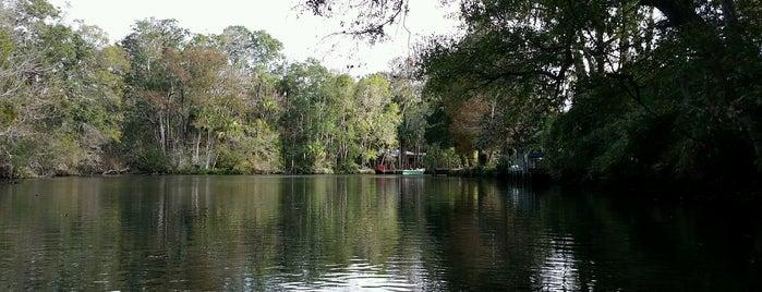 Homasassa Springs is one of Spring Break 2012.