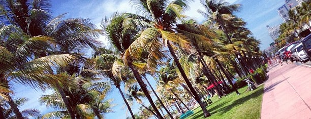 Lummus Park Is One Of The 15 Best Places For People Watching In Miami Beach