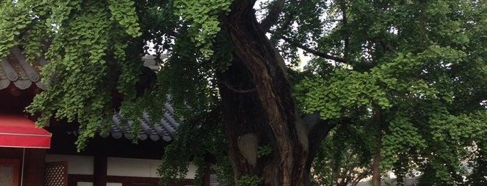 전주한옥마을600년 은행나무 is one of 내가 다녀온 전주 한옥마을.