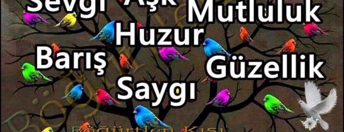 Karadeniz Sahil Yolu is one of Favorite Arts & Entertainment.
