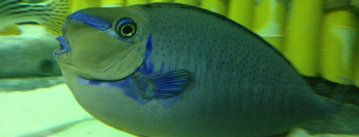 Underwater World is one of Great Family Holiday Attractions Around Australia.